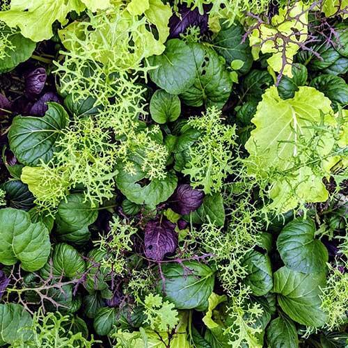 Lockwood Farms salad mix