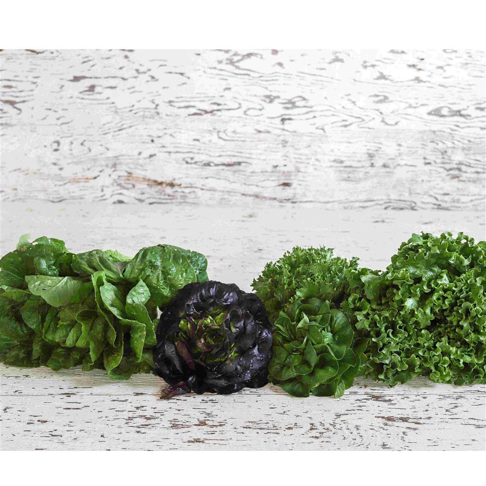 Lettuce, Green & Red Leaf